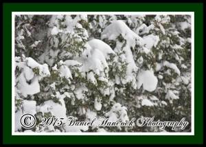 Wonderful Snow - By Daniel Hancock