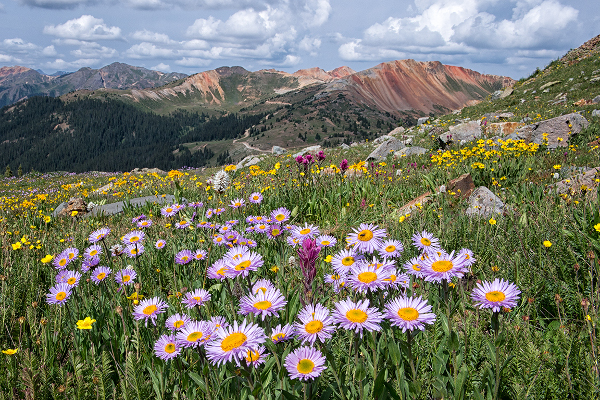 Colorado Wild Flowers